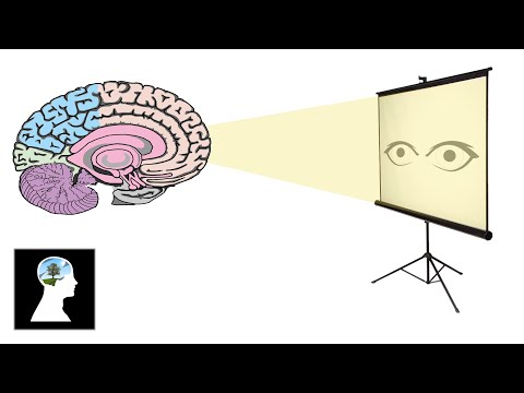 Tsur Taub Video: What Is Consciousness? – A Step by Step Examination
