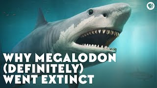 Video Why Megalodon (Definitely) Went Extinct MP3, 3GP, MP4, WEBM, AVI, FLV Januari 2019