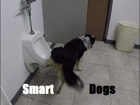 Funny Dogs Peeing,What a smart dog ? :)