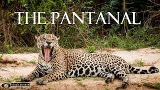 wildlife brazil 2m8s