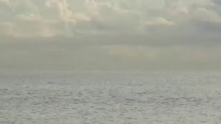 The day the dolphins came to Big John Beach Park. pay attention around 00:25.