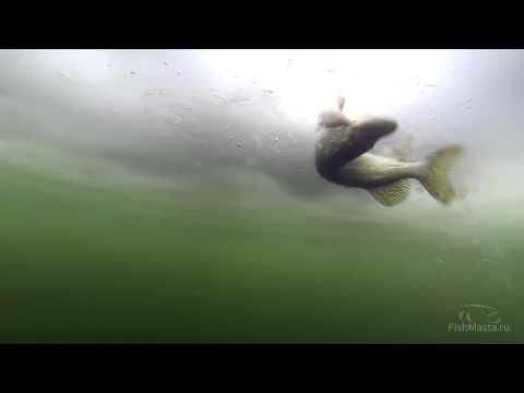 """""""Сабанеевская"""" рыбалка и прикормка на видео. Часть 6. Форель: Уловистая жерлица."""