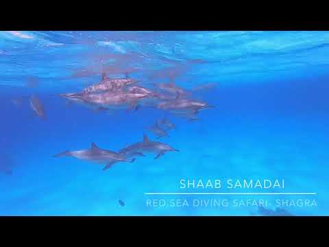 Red Sea Diving Safari-Marsa Shagra Village: Shaab Samadai