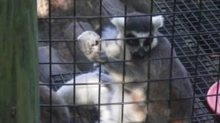 CWI Investigates: Jacksonville Zoo