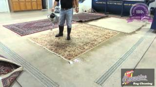 Preparing Persian Rugs for Pet Stain and Odor Removal