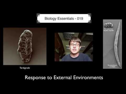 External - 019 - Response to External Environments Paul Andersen explains how organisms respond to the external environment. He begins with a discussion of behavioral r...