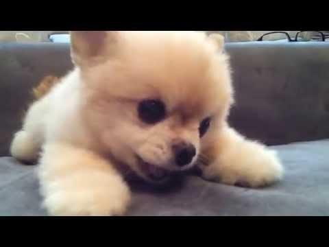 是玩偶還是活生生的小狗狗!?