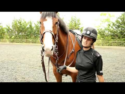 A Day in the Life - Police Scotland Mounted Unit (видео)