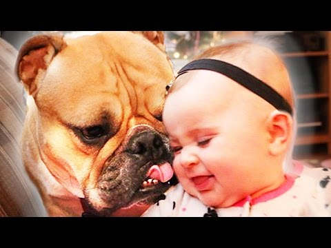 WATCH: When a Baby and Bulldog Become Best Friends