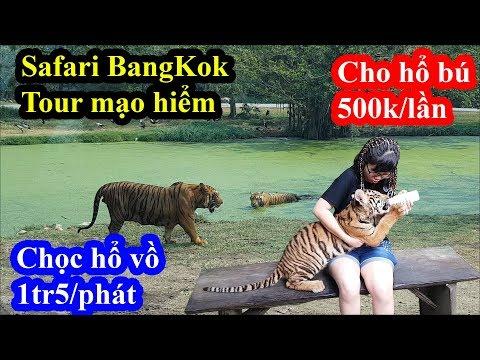 Kinh hãi loại hình du lịch cho hổ sư tử vồ tại Safari Bangkok với giá siêu chát - Thời lượng: 23 phút.