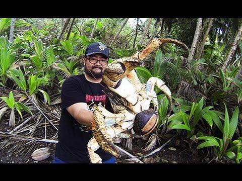 探險家在澳洲旅行偶遇巨型恐怖生物,完全沒想到善於爬樹的牠居然會是...