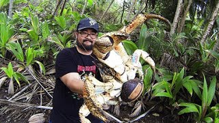 Fearless holidaymaker Mark Pierrot picked up a coconut crab and posed fora photo in the Christmas Island jungle. Weighing up to...