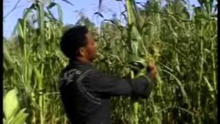 Tigrina Music 1 MEKELLE TEKlLAY GESESEW ETHIOPIA.