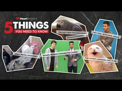 5 Things You Need to Know: Featuring Shawn Mendes +  Nick Jonas