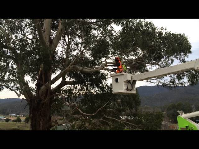 Stump Pro - Cherry Picker, Tree Removal, Hobart TAS