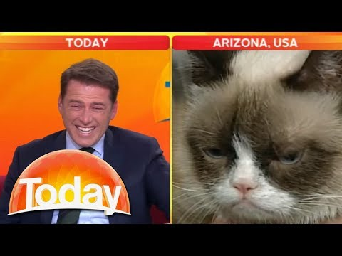 today - What happens when Karl Stefanovic takes on Grumpy Cat? Wake up with TODAY Weekdays from 5.30AM / Weekends from 7.00am on Channel Nine. Follow TODAY on Facebo...