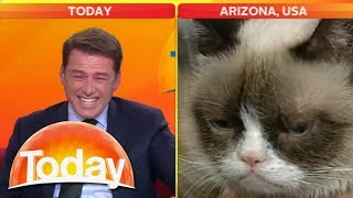Reporter can't stop laughing at Grumpy Cat