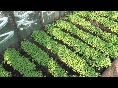 Отчет по совместному производству по выращиванию семян вошел одно