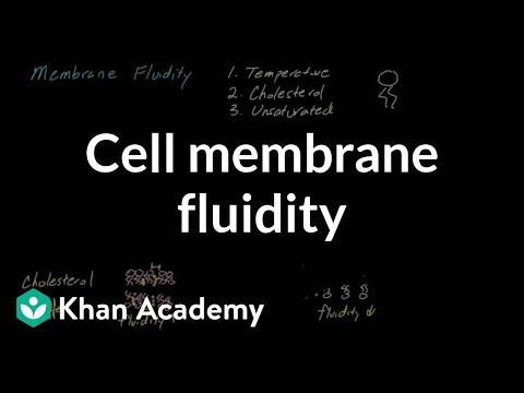 Cell membrane fluidity | Cells | MCAT | Khan Academy