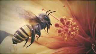 Crying For The Honey Bee