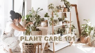 Video How To Care For Indoor Plants + GREENIFY YOUR SPACE MP3, 3GP, MP4, WEBM, AVI, FLV Juni 2019