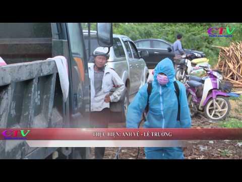Khẩn trương dập dịch LMLM, tả lợn Châu Phi
