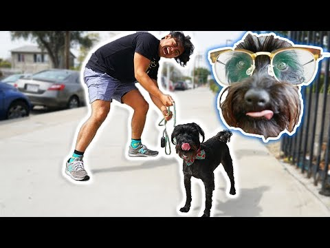 I Let My Dog Walk Me For A Day!