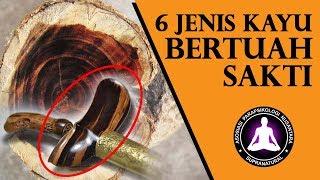 Download Video 6 Jenis Kayu Bertuah Paling Ampuh Dipercaya Sangat Sakral di Indonesia MP3 3GP MP4