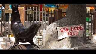 The Sea Lion Show at West Edmonton Mall
