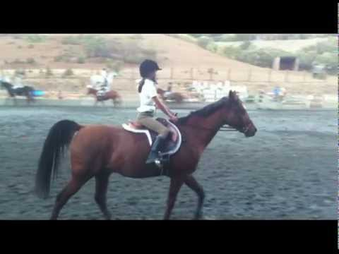 Westwind Horseback riding competition Oct 27 2012