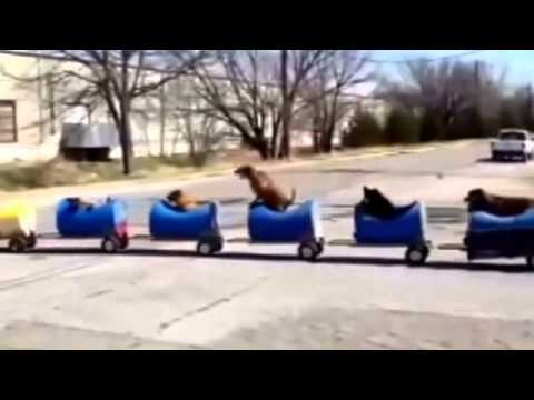 texas man builds homemade train to take rescue dogs on adventures