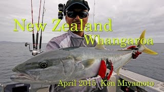 Whangaroa New Zealand  city images : Kingfish Whangaroa in New Zealand