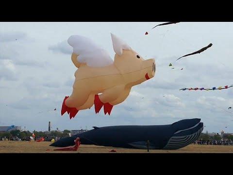 Fliegende Schweine und Teddys beim Berliner