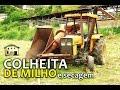 Colheita de Milho e Secagem