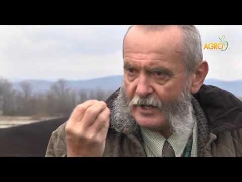 Конете на България - епизод III