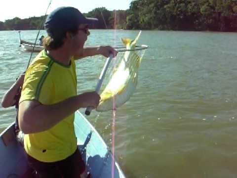 Pesca Dourado - Rio Paraná - Pauliceia-SP
