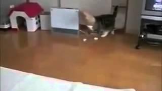 Los gatos mas locos y graciosos del 2013