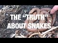 """Download Lagu The """"Truth"""" About Snakes Mp3 Free"""