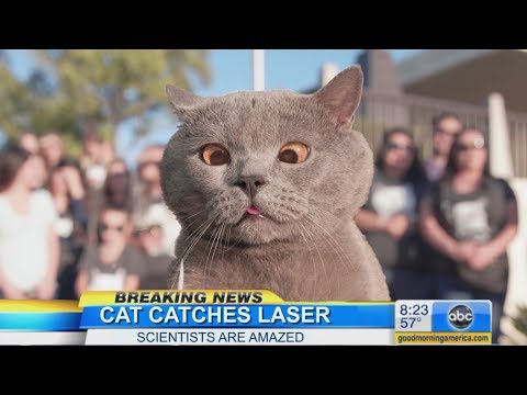 The Cat Who Caught the Laser (видео)