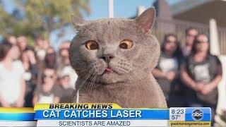Video The Cat Who Caught the Laser MP3, 3GP, MP4, WEBM, AVI, FLV Juni 2018
