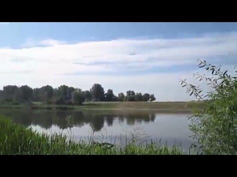 Лекарственные травы Донского берега