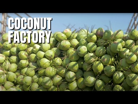 Video AMAZING COCONUT FACTORY CHIANG RAI THAILAND ❤️️ download in MP3, 3GP, MP4, WEBM, AVI, FLV January 2017