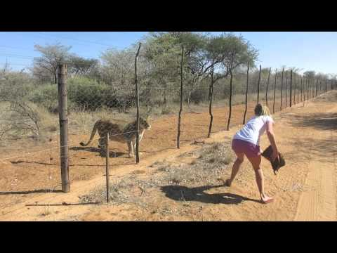 wildlife - www.maloupettersson.se. OBS watch in HD otherwise the quality is super mega shitty haha. A little movie from when I went to Namibia in june 2013. Was working...
