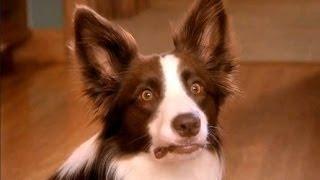 Lustige Hunde Von Furzen Compilation 2014 [NEU HD]