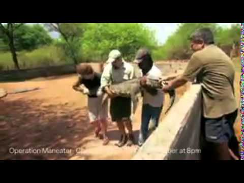 crocodile - Watch the video of the moment a crocodile attacks Mark Evans with a ferocious 'headbutt'.[ RAW ] Watch the video of the moment a crocodile attacks Mark Evans with a ferocious 'headbutt'.[ RAW...