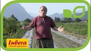 Erdnüsse aus dem eigenen Garten - Lubera selektioniert Erdnuss-Sorten für den Hausgarten