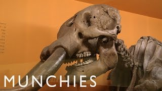 Dining On Woolly Mammoth by Munchies