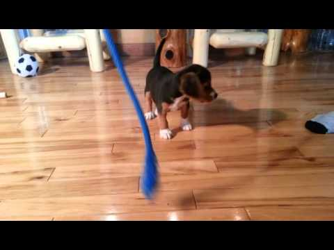 Cute little Bridger at Play