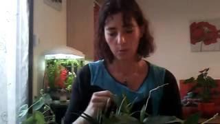 Jardinage intuitif : vive le pendule et les baguettes !