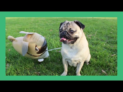 Doug the Pug And His Imaginary Friend